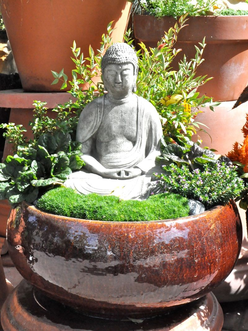 After A Visit To Sperling Nursery I Feel As Calm This Buddha