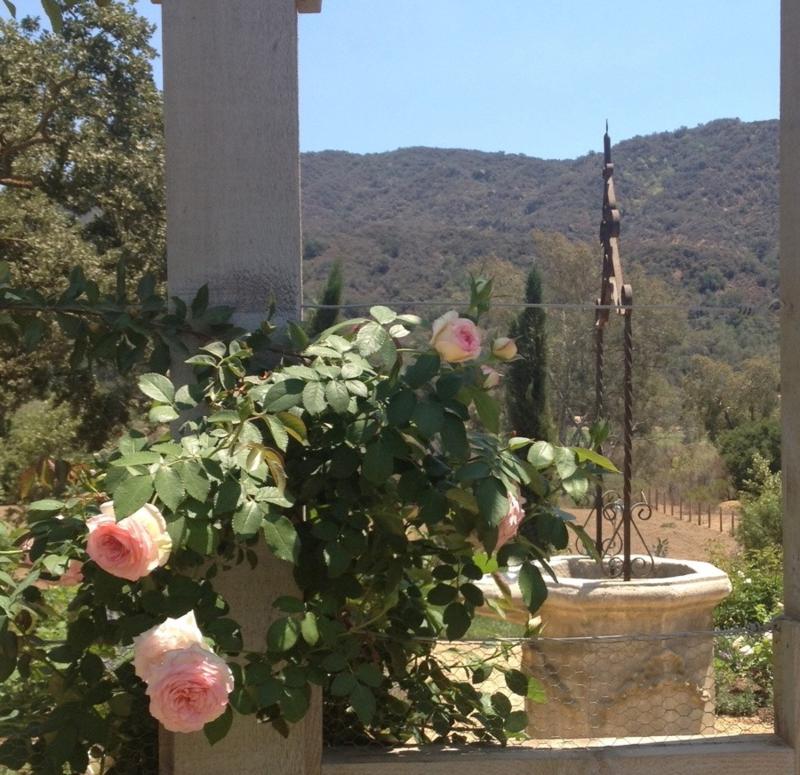 Velvet and Linen: Eden Roses at Patina  Farm