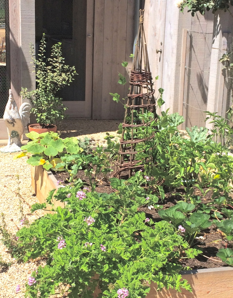 velvet and linen: a patina farm garden update