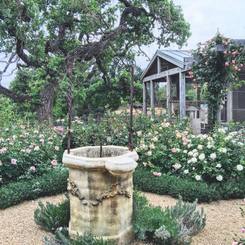 Patina Farm: David Austin Rose Garden