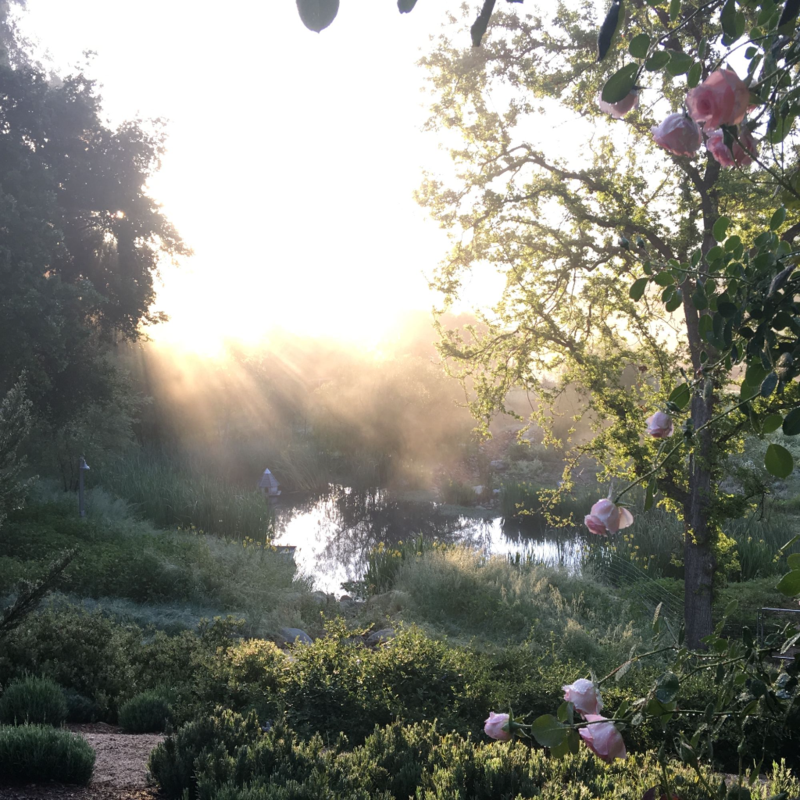 Patina Farm: Pearly Gates Rose Vine frames the view of the pond