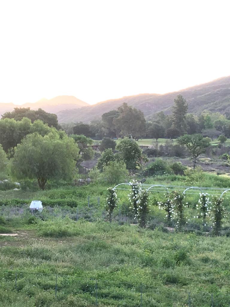 Patina Farm: White Floribunda Rose Vines on the Arbor